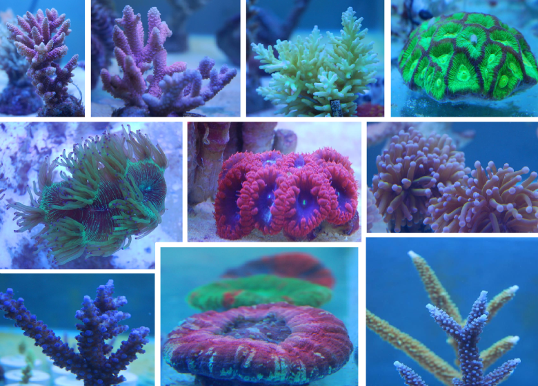 Coral images