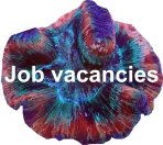 Job vacancies.jpg